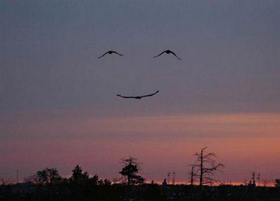 Accidental Smileys Optical Illusion Set