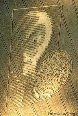 Alien Workshop Crop Circles Illusion
