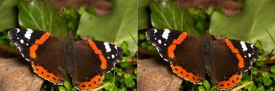 Nature Stereograms