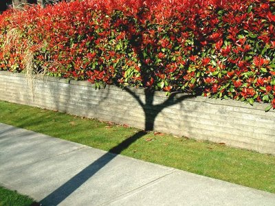 Amazing Shadow Tree Illusion