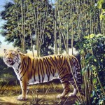 Hidden Tiger Optical Illusion