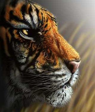 Gardners 4 Hidden Tigers