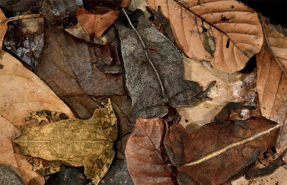 Camouflaged Toads Optical Illusion