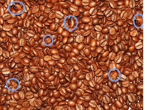 coffee faces and lady bugs optical illusion3