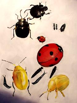 Dancing Beetles Optical Illusion