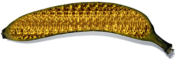 Stereo Banana Optical Illusion