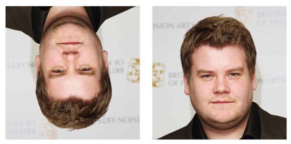 The Fat Face Thin Illusion
