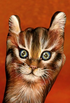 Cat-on-red1-231x340