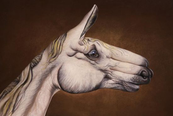 Guido Daniele Handimals 7