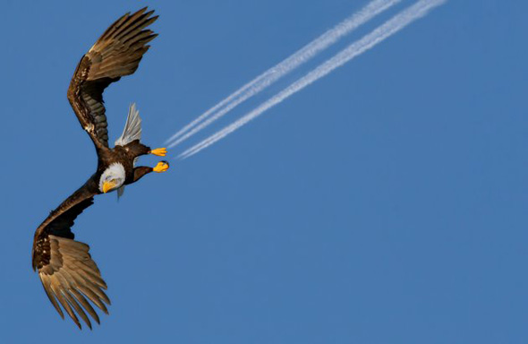 An Eagle, Goose and a Stork...