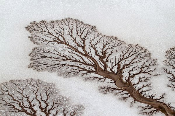 Desert River That Looks Like Tree