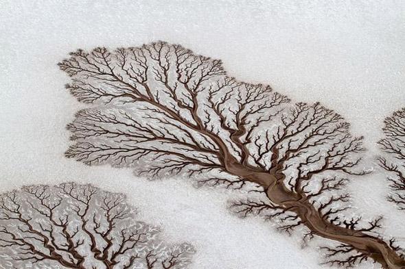 Desert River That Looks Like Tree