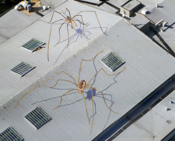 Spiders On a Roof