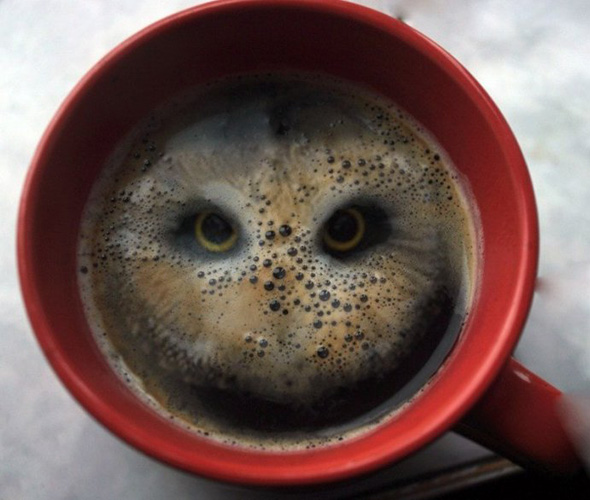 Theres an Owl in My Coffee!