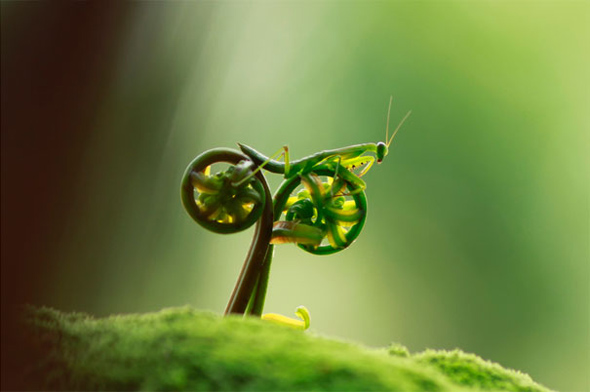 Bike riding Mantis Illusion