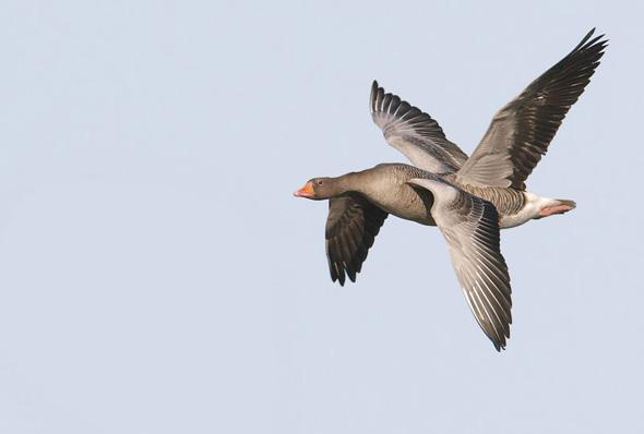 Jens Birchs Funny Looking Bird(s)