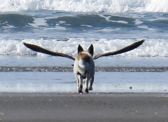 optical illusion dog illusions wings bird animal amazing tricky seen outdoor ever dogbird moillusions momento giusto headed al funny puzzles