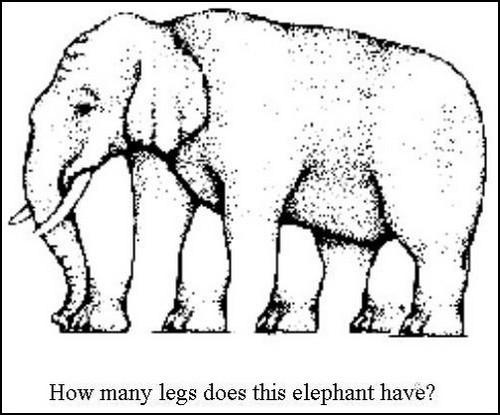 Elephant Legs Optical Illusion