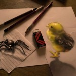 3D Bird and Spider Drawing