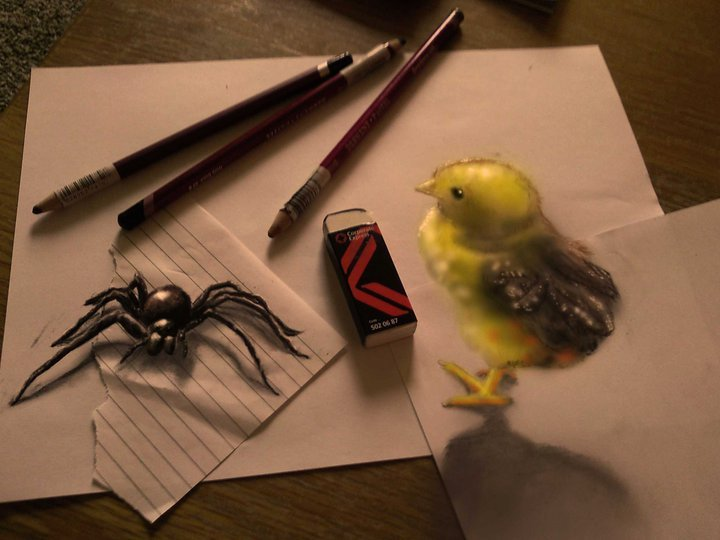 3D Bird and Spider Drawing Optical Illusion