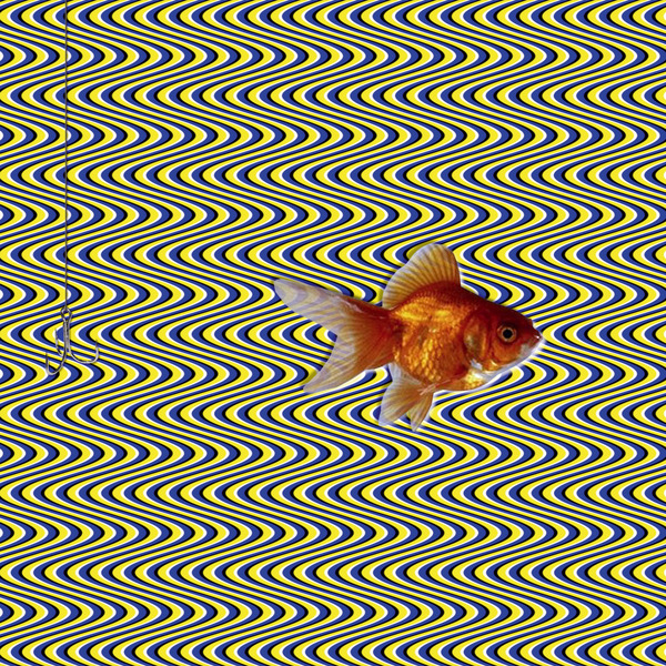 3d optical illusion fish moving sarcone gianni patterns illusions magic moillusions society behance trick mind self eyes archimedes reserved lab