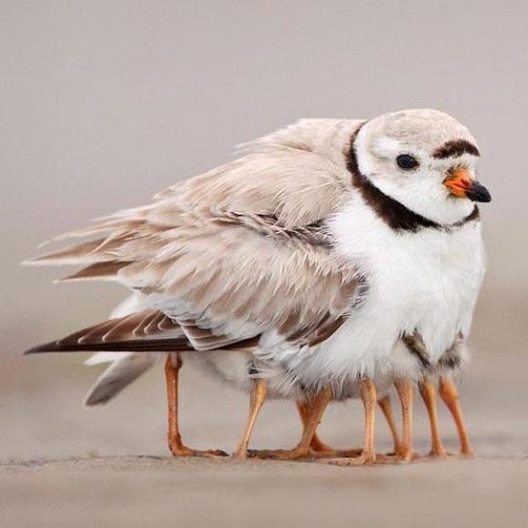 Bird Legs Optical Illusion
