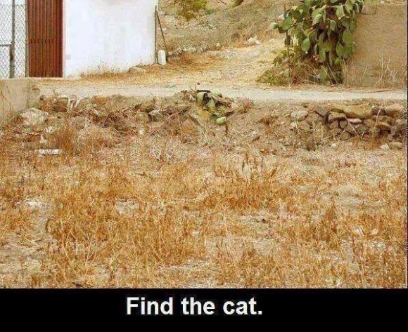 Find the Cat Optical Illusion