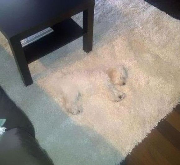 Nice Rug Optical Illusion