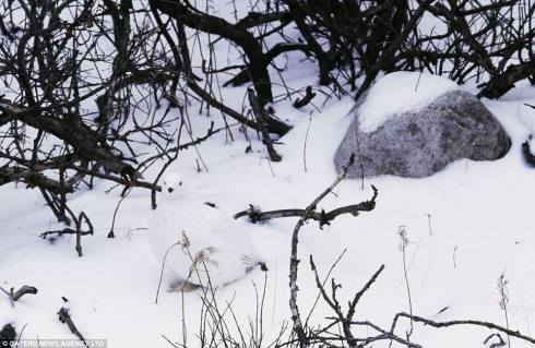 Hidden in the Snow Optical Illusion