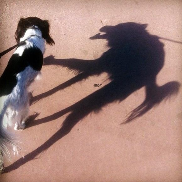 Hyena Shadow Optical Illusion