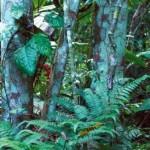 Hidden Jungle Animal Optical Illusion