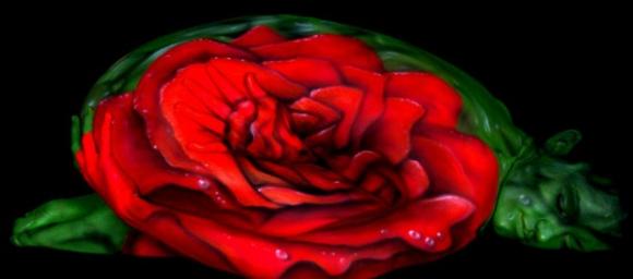 The Human Rose Optical Illusion