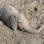 Baby Elephant Hidden In the Sand Optical Illusion