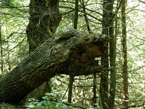Squawking Bird in a Tree Optical Illusion