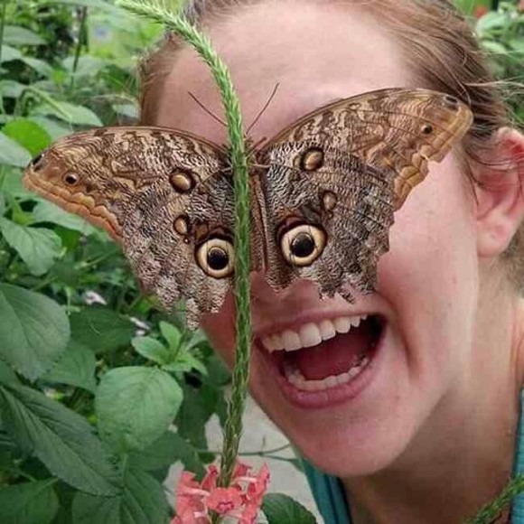 butterfly eyes optical illusion
