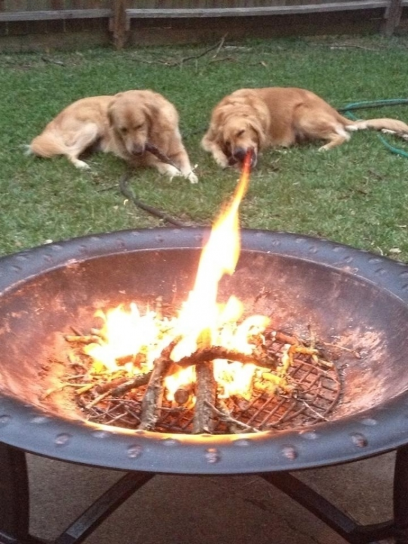 Fire Breathing Dog Optical Illusion