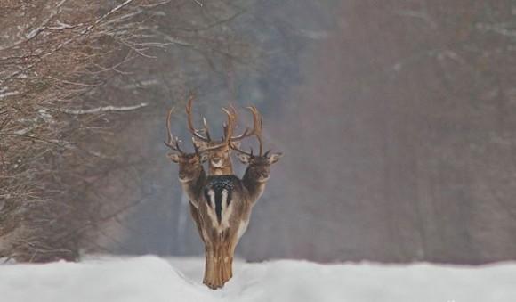 three headed deer optical illusion
