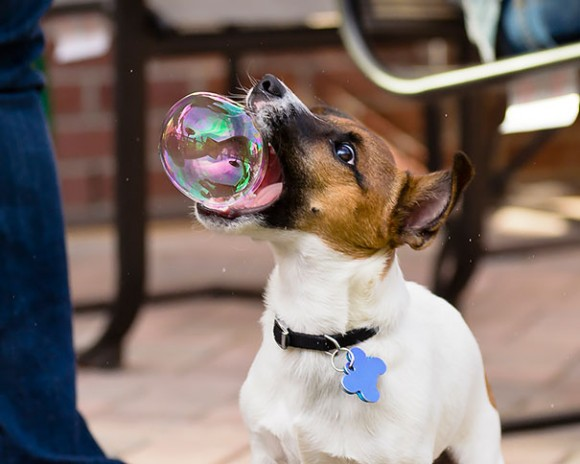 Dog Catching Bubble optical illusion