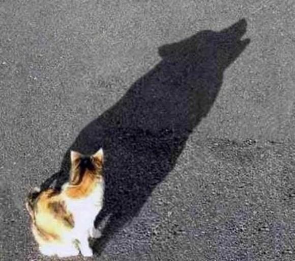 Inner Beast Optical Illusion