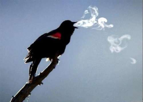 Smoking Bird Optical Illusion