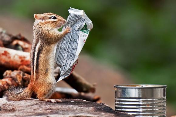 Chipmunk Reading Paper Optical Illusion