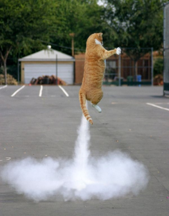 rocket cat optical illusion