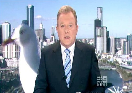 Newsman Attacked By Giant Bird Optical Illusion
