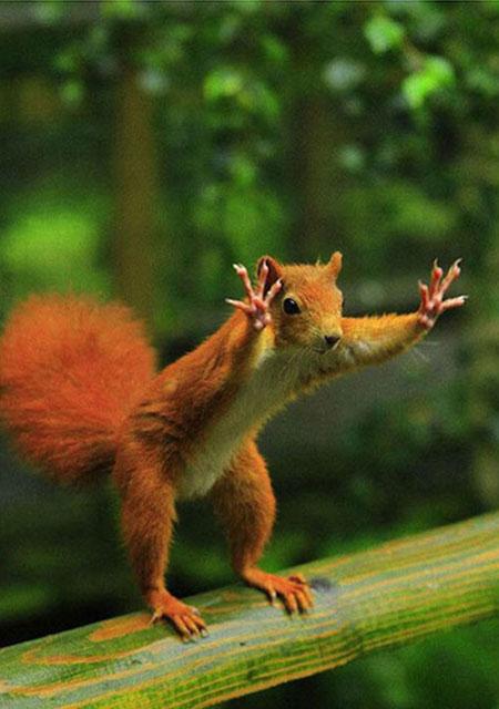 Surrendering Squirrel Optical Illusion