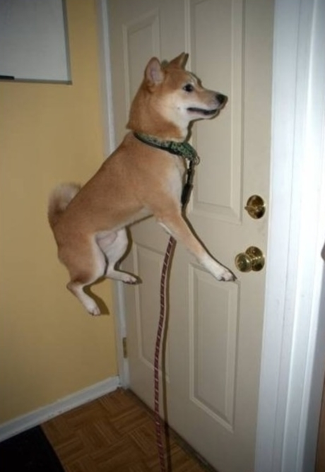 dog optical illusion floating illusions air funny cool dogs animals animal looks doge memes down weird puppy check awesome moillusions