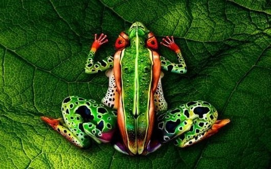 Body Paint Frog