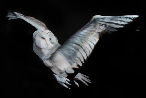 Body Paint Owl Optical Illusion