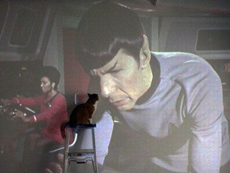 Furry Star Trek Fan