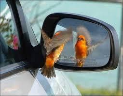 Vain Hummingbird