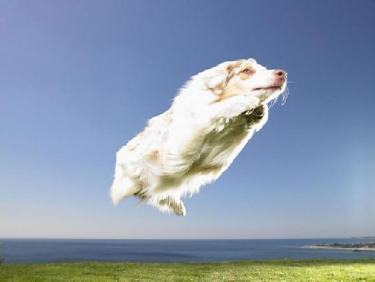 Flying White Dog Optical Illusion